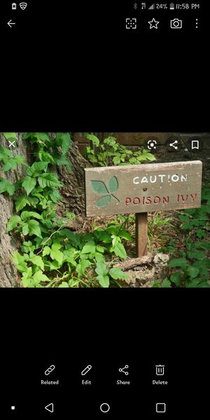 Poison ivy clean & remove for Sale in Chesapeake, VA