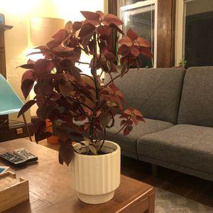 Large Magenta Coleus Indoor Plant w/ Ceramic Pot for Sale in Cambridge, MA