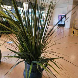 Fake Plant for Sale in Irvine, CA