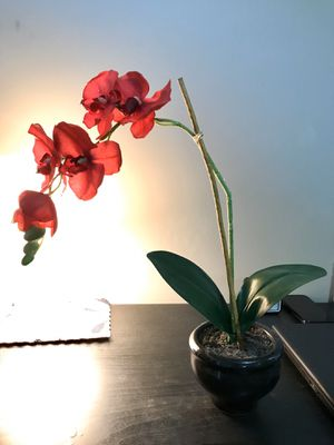 Decorative Flower Pots for Sale!! for Sale in Jersey City, NJ