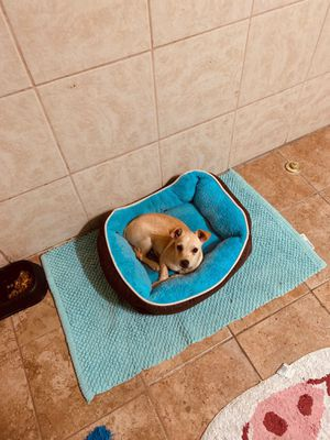 Doggy bed included for Sale in Loma Linda, CA