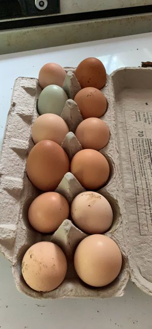 Eggs for Sale in Black Diamond, WA