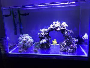 Saltwater aquarium and equipment for Sale in Murrieta, CA