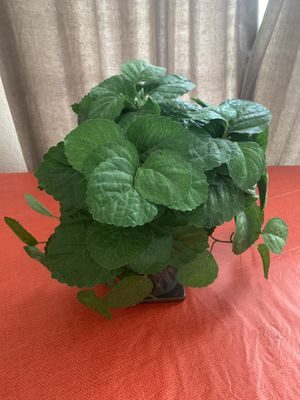 Fake plant for Sale in Spring, TX