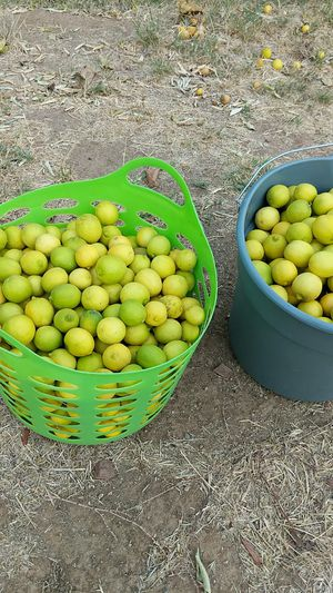 Lime $5 per bucket for Sale in Norco, CA