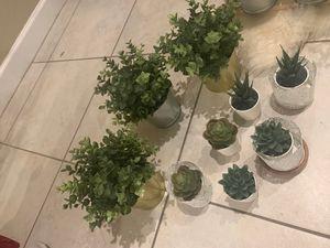 Fake plants Decoration for Sale in Mesa, AZ