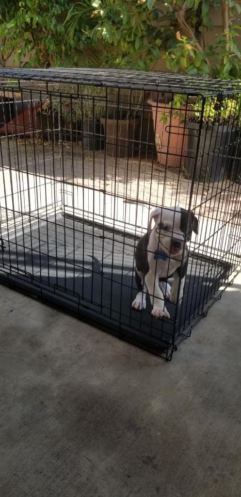 🐾🐾🐾 🐶 XL DOG CRATE 🐶 🐾🐾🐾