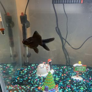 Fish tank for Sale in Roselle, IL