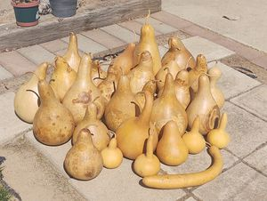 Gourds!! for Sale in Boise, ID