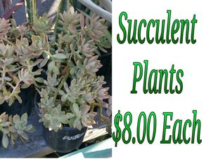 Succulent plants for Sale in Hacienda Heights, CA