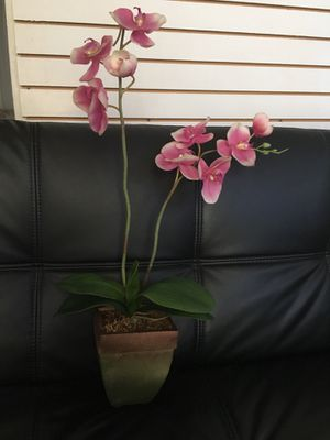 Orchid flowers for Sale in Rowlett, TX
