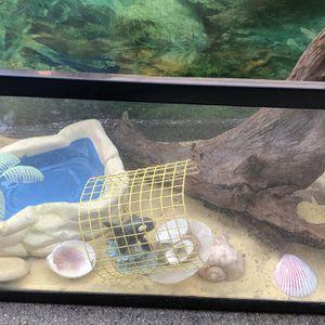 Small Terrarium Hermit Crab for Sale in Moseley, VA