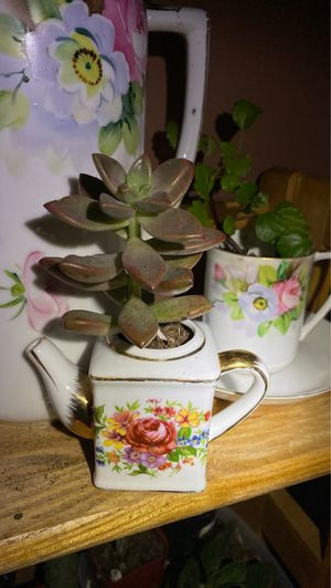 Succulent in Mini tea pot with golden accent for Sale in Hayward, CA