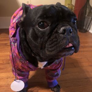 Retro Dog Wind Breaker Coat Purple Orange Multi for Sale in Oklahoma City, OK