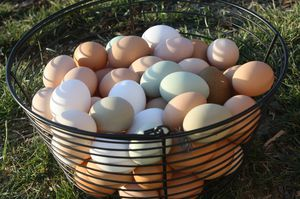 Organic Eggs for Sale in Irving, TX