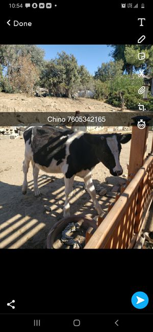 Cow corral for Sale in GLMN HOT SPGS, CA