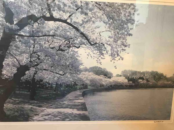 Dc Cherry Blossoms @ Tidal Basin photo w/ Elegant Studded Frame
