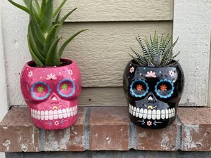Two skeleton planters with cacti 🌵 plants. for Sale in Federal Way, WA
