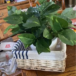 Basket And Plant for Sale in Modesto,  CA