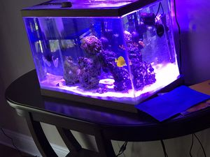 20g Aquarium for Sale in Gaithersburg, MD