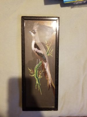 Feathered bird for Sale in Buffalo, NY