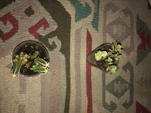 Small Succulents (one for 2 and 2 for 4) for Sale in Klamath Falls, OR