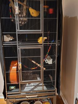 Sugar Gliders And Full Cage Set Up With Everything for Sale in Miami,  FL