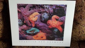 Colorful Starfish and Anemone by Lee Mann for Sale in Auburn, WA