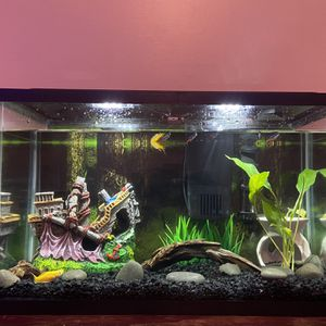 Aquaculture 10 gallon Starter Kit for Sale in Indianapolis, IN