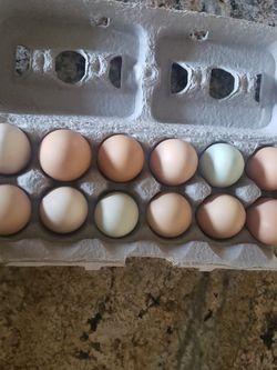 Fresh Chicken Eggs for Sale in Rio Linda,  CA