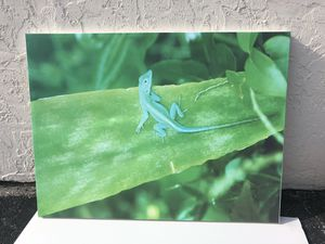 Canvas Print Green Lizard - Wall Art Decor for Sale in Lake Worth, FL