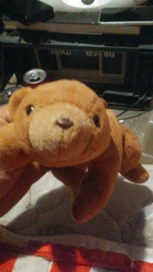 Beanie baby cubbie very rare for Sale in Columbus, OH