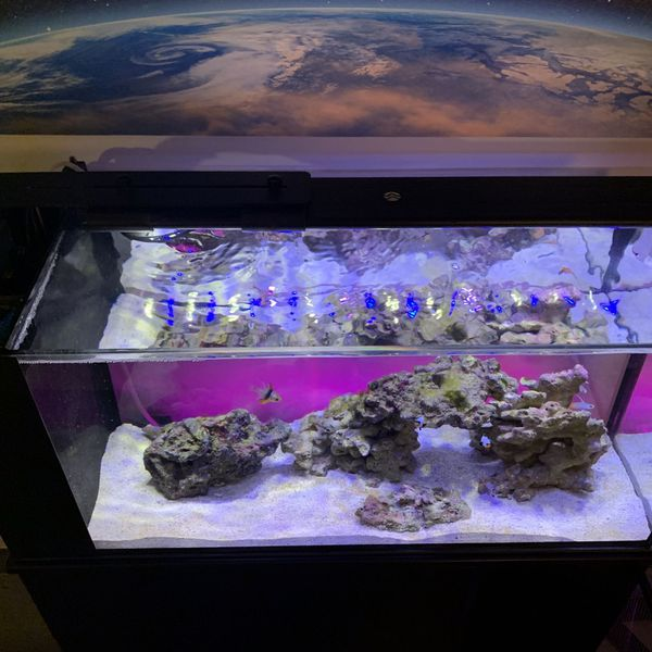 "Orbit 24"" Reef LED+Mount"