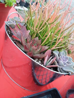 """12"""" pot with succulent plants today only $20 for Sale in Whittier, CA"""