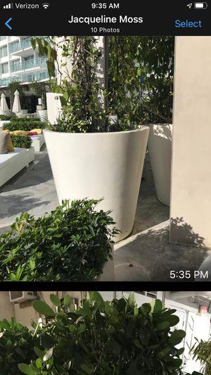 Decorative flower pots for Sale in Miami, FL