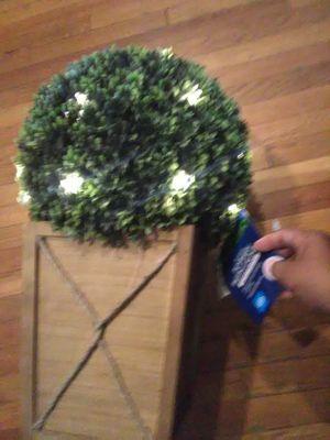 Topiary, garden decor,small tree for Sale in Los Angeles, CA