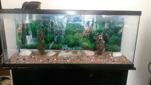 55 gallon fish tank with accessories for Sale in St. Louis, MO