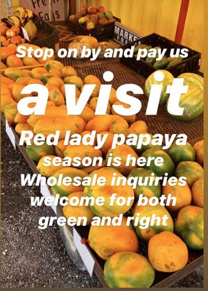 Red lady papayas for Sale in Miami, FL