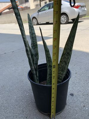 Snake plant great for oxygen and clean air for Sale in Baldwin Park, CA